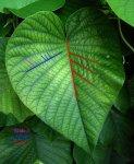 fractal_nature